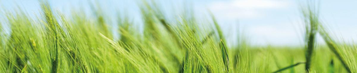 Sistemas agricultura de precisión
