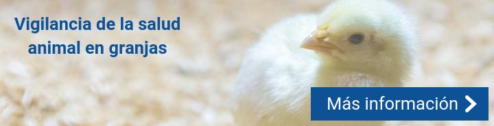 Tecnologías disruptivas en granjas avícolas